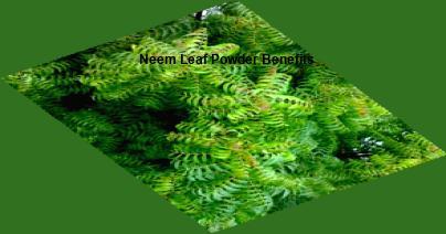 Neem powder benefits, neem leaf powder benefits